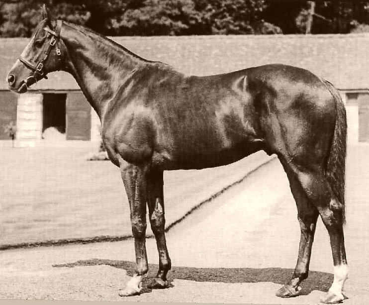 old photo of racehorse